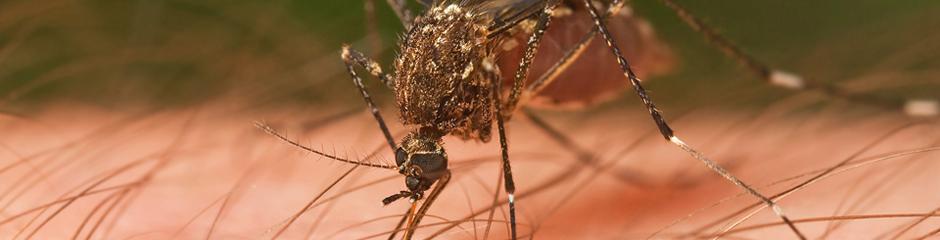 ban-moustiques